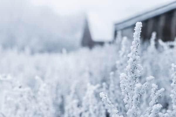 sneeuw2